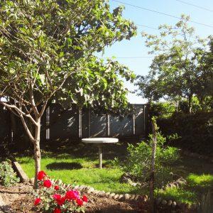 Гостевой дом Вахтанга: двор с фрагментами голубых ворот, роз и деревьев